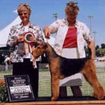 Brady Champion AKC Airedale Dog