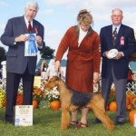 Tuesday AKC Airedale Dog