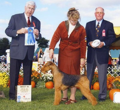 Champion Airedale Terrier