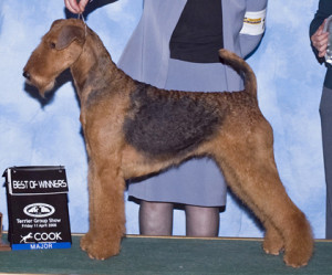 Paris Airedale Champion