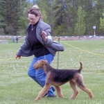 AKC Champion Airedale Puppies For Sale