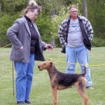 AKC standard Airedale Dogs